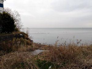 琵琶湖 湖岸緑地 田村-1