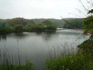 淡路島のバス釣り