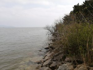 琵琶湖おかっぱりバス釣りポイント湖岸緑地吉川